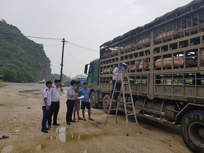 quy định vận chuyển gia súc
