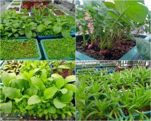 rau xanh đóng vai trò hết sức quan trọng trong sự phát triển của con người