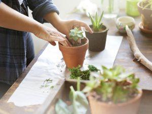 vận chuyển cây cảnh nhỏ, hoa để bàn