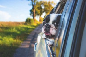 vận chuyển chó, mèo bằng xe khách