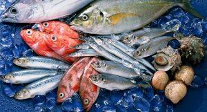 một số vấn đề gặp phải khi vận chuyển hải tươi sản sống đi xa